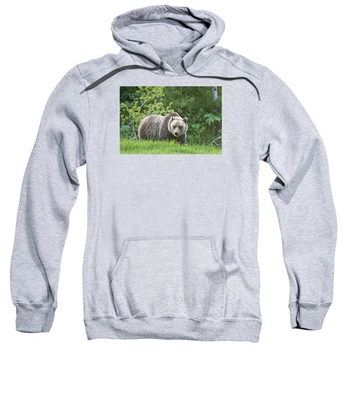 Grizzly Bear Sweatshirt by Gary Lengyel