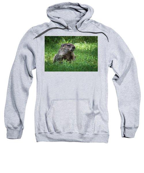 Groundhog Posing  Sweatshirt