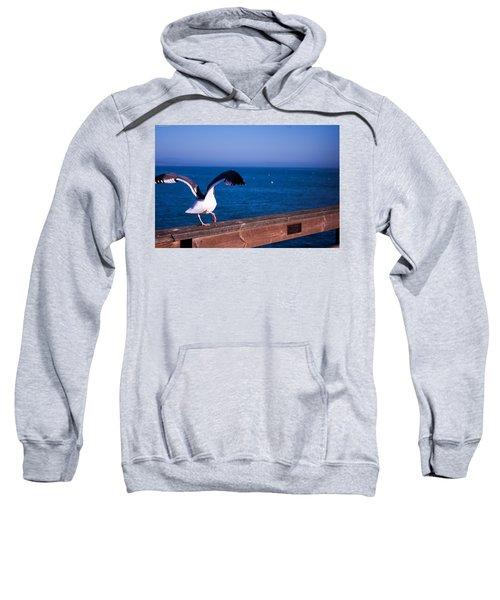 Gull Dance Sweatshirt