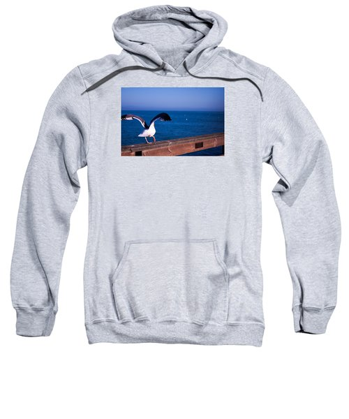 Gull Dance Sweatshirt