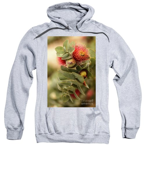 Sweatshirt featuring the photograph Gum Nuts by Werner Padarin