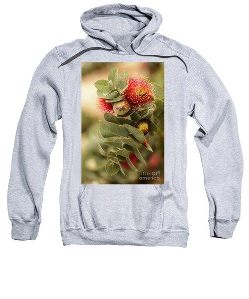 Gum Nuts Sweatshirt