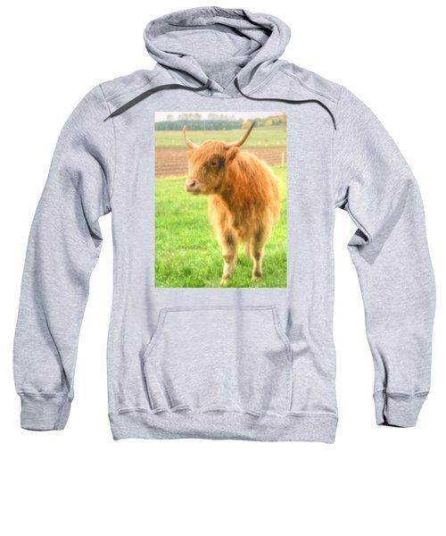 Hairy Coos Sweatshirt