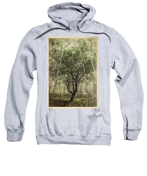 Hand Of God Apple Tree Poster Sweatshirt