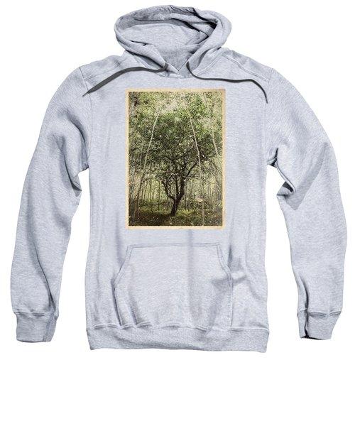 Hand Of God Apple Tree Poster Sweatshirt