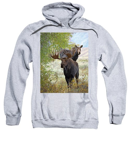 Handsome Bull With Cow Sweatshirt