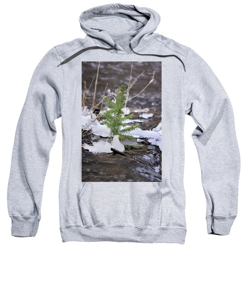 Hanging In There Sweatshirt