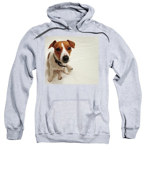Happiness Is A Cute Puppy Sweatshirt