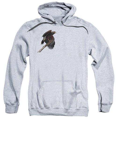 Harris Hawk - Transparent 2 Sweatshirt by Nikolyn McDonald