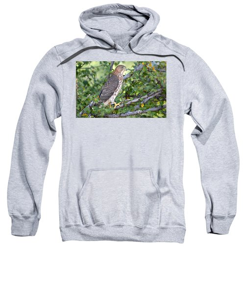 Hawk  Sweatshirt