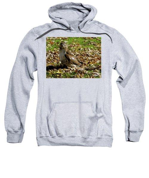 Hawk Falling Leaves Sweatshirt