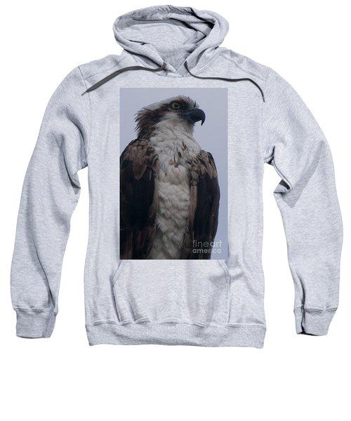 Hawk Looking Into The Distance Sweatshirt