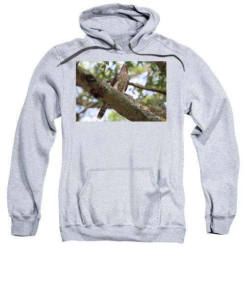 Hawk On A Branch Sweatshirt