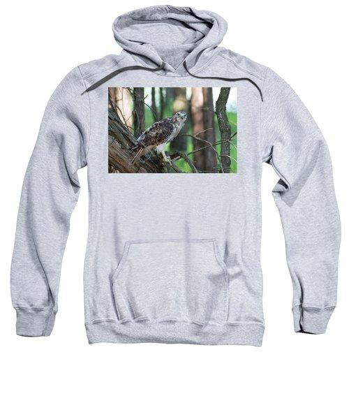 Hawk Portrait Sweatshirt