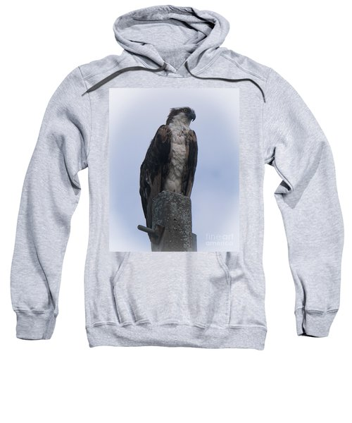 Hawk Pose Sweatshirt