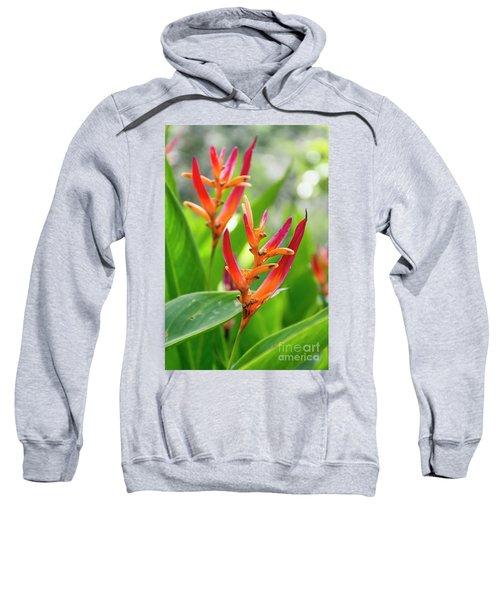 Heliconia Psittacorum Sweatshirt