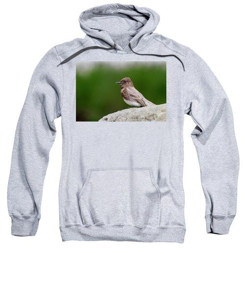 Black Phoebe Sweatshirt