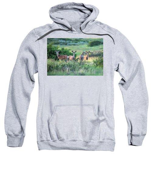 Herd Of Muleys Sweatshirt
