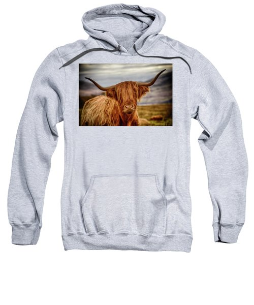 Highland Cow Sweatshirt