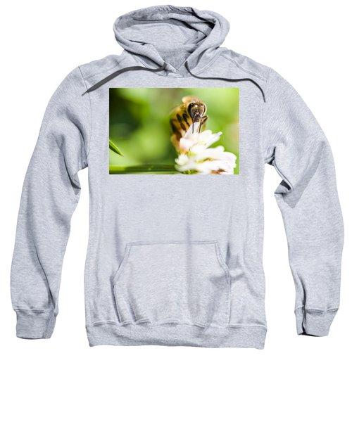 Honey Bee On Clover Flower Sweatshirt