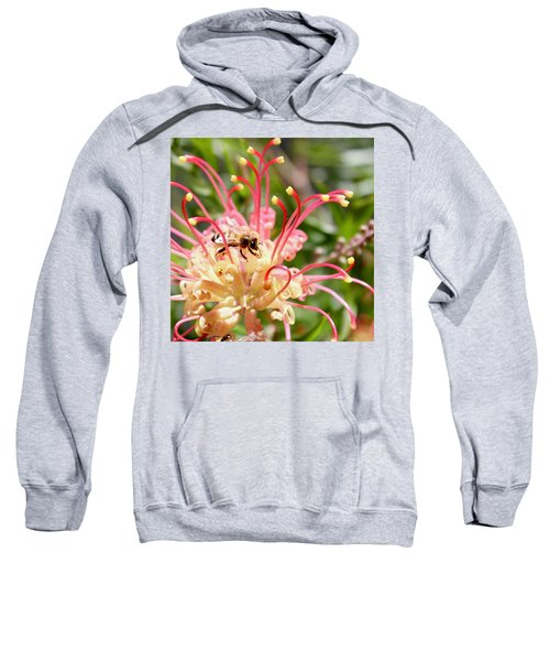 Honey Bee On Grevillea  Sweatshirt