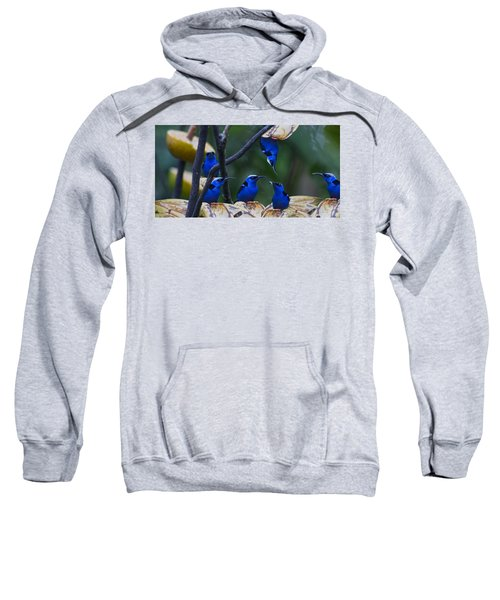 Honeycreeper Sweatshirt