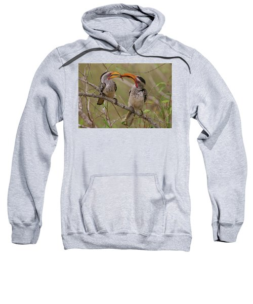 Hornbill Love Sweatshirt