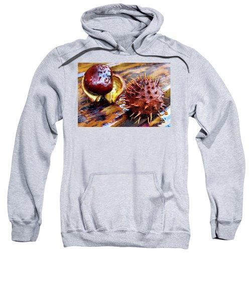 Horse Chestnut Aesculus Sweatshirt