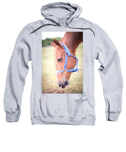 Horse Eating Grass Sweatshirt
