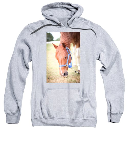 Horse Eating In A Pasture In Vibrant Color Sweatshirt