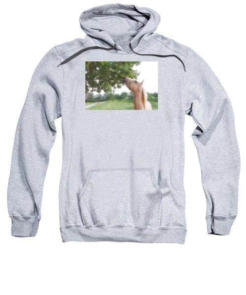 Horse Grazes In A Tree Sweatshirt