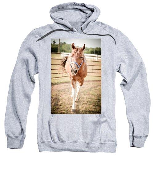 Horse Walking Toward Camera Sweatshirt