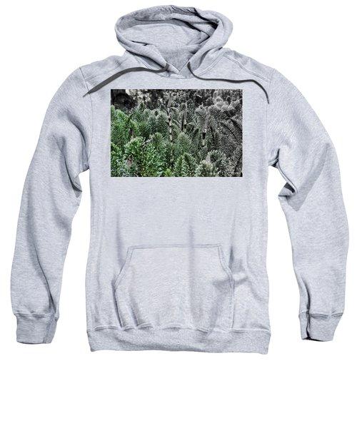 Horsetail Dewpoint Sweatshirt