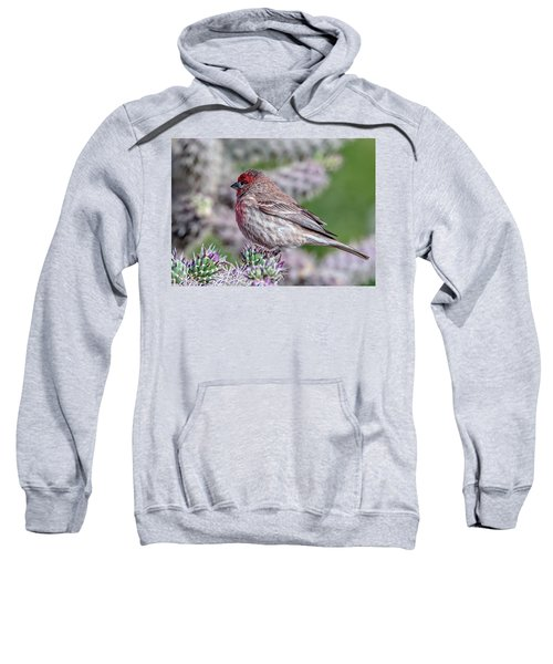 House Finch Male Sweatshirt