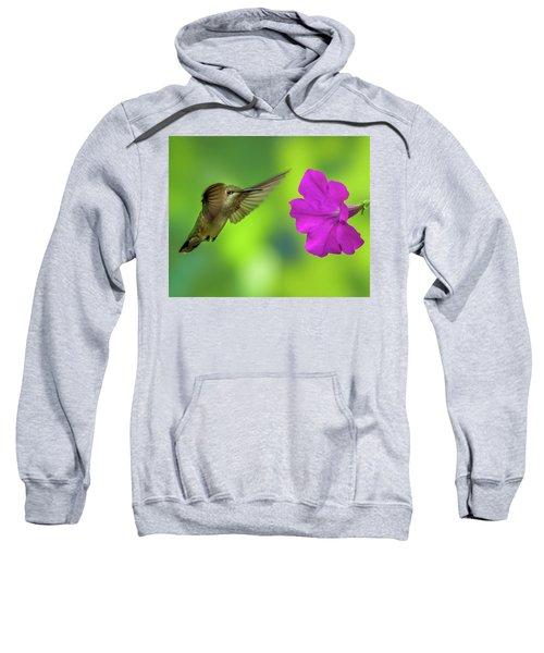 Hummingbird And Flower Sweatshirt