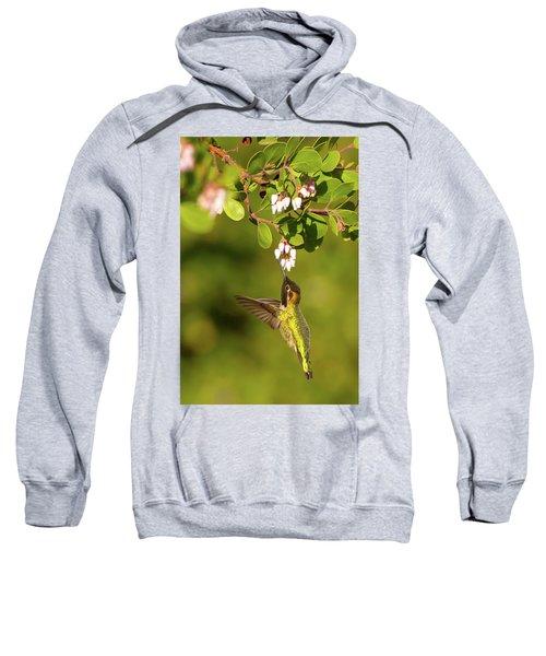 Hummingbird And Manzanita Blossom Sweatshirt