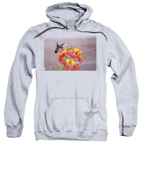 Hummingbird At Work Sweatshirt