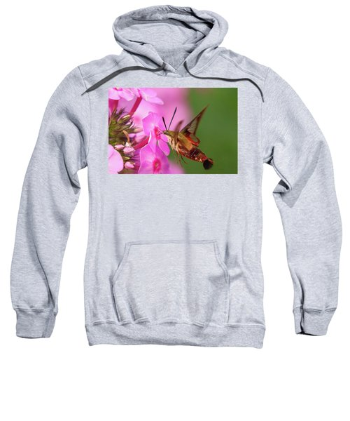 Hummingbird Moth Feeding 1 Sweatshirt