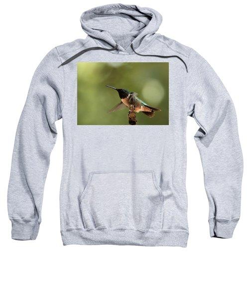Hummingbird Take-off Sweatshirt
