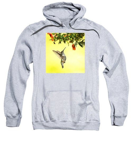 Hummingbird Under The Floral Canopy Sweatshirt
