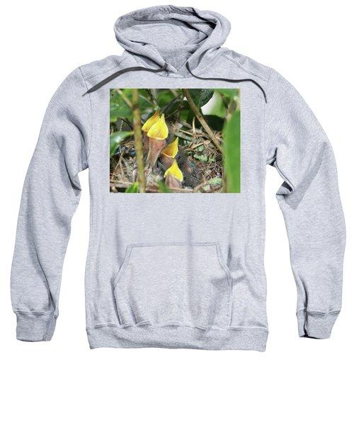 Hungry Baby Birds Sweatshirt