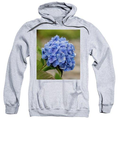 #hydrangea In Blue Sweatshirt