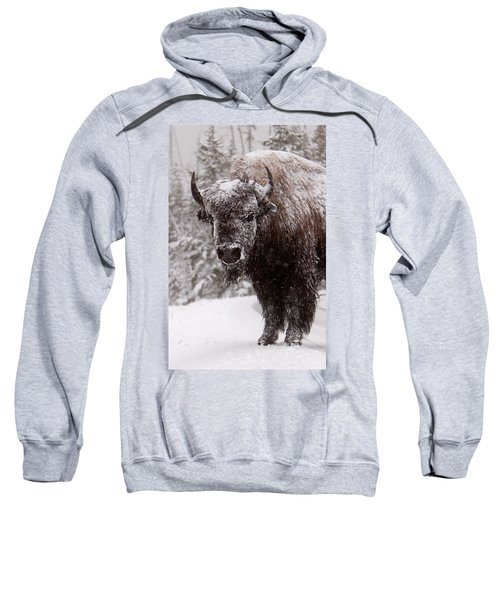 Ice Cold Winter Buffalo Sweatshirt