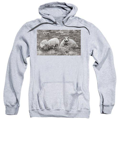 Iceland Woolly Bear Sheep Sweatshirt
