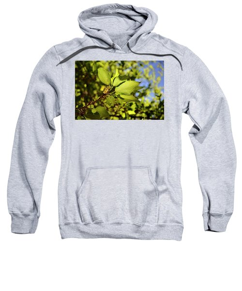Illuminated Leaves Sweatshirt