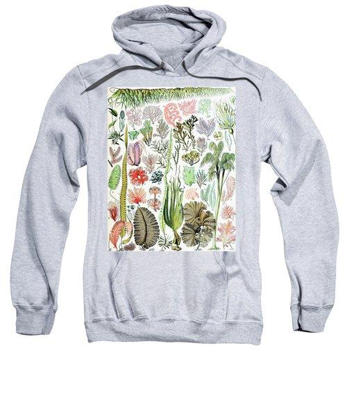 Illustration Of Algae And Seaweed  Sweatshirt
