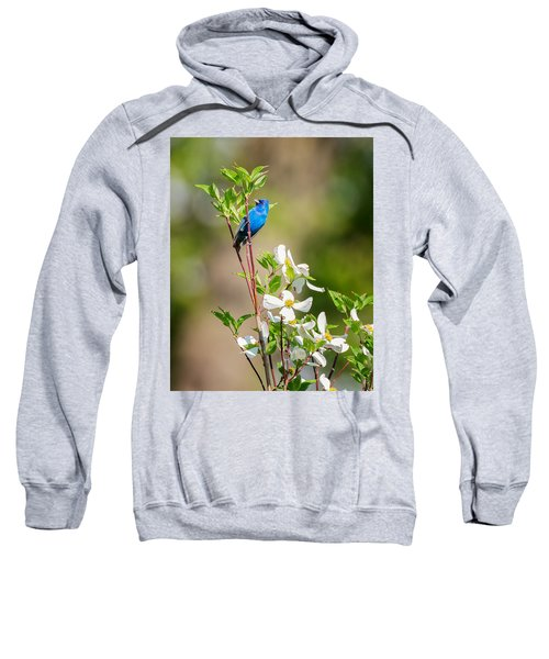 Indigo Bunting In Flowering Dogwood Sweatshirt by Bill Wakeley