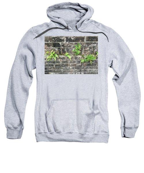 Intrepid Ferns Sweatshirt
