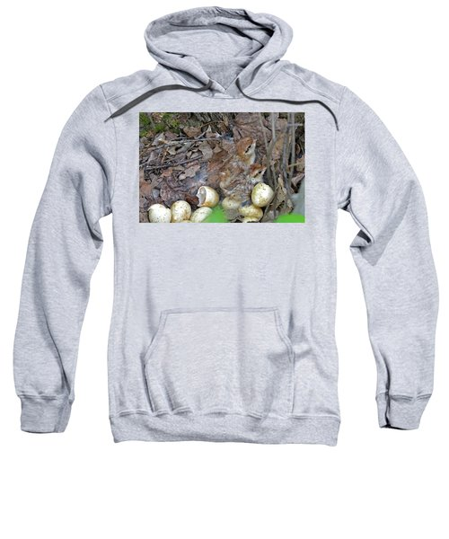 Just Hatched Ruffed Grouse Chicks Sweatshirt