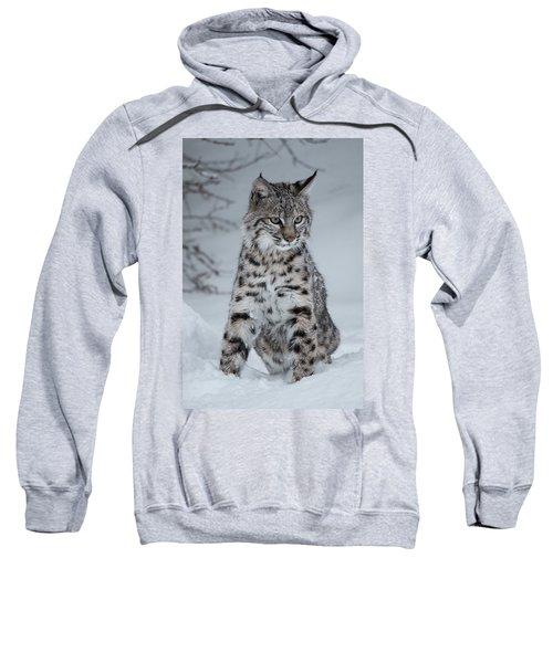 Juvenile Bobcat In The Snow Sweatshirt